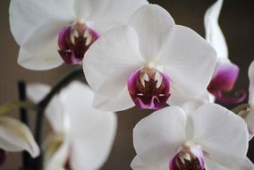 photo of orchids with purple mid