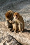 two monkeys are sitting in an embrace on a log