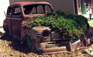 rusty car body with green plant