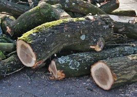logs from sawn wood