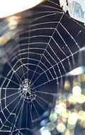 Macro photo of the spider web