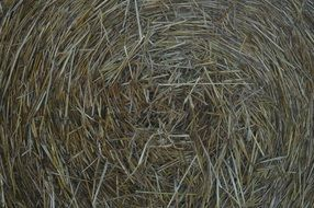 straw in a bale on the field