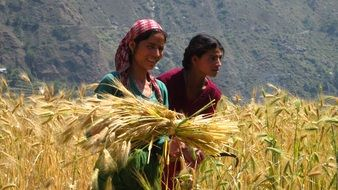 two happy asian women in ripe wheat field, harvesting
