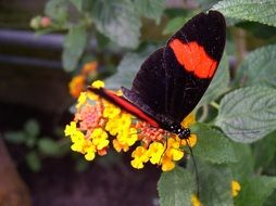 black and red butterfly in Maximilian park