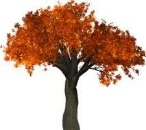 graphic image of an autumn deciduous tree