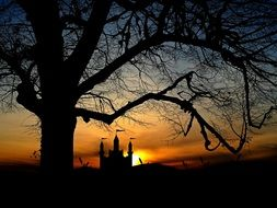 silhouette of a tree on a background of a castle at sunset