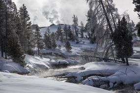 winter landscape of the yellowstone national park