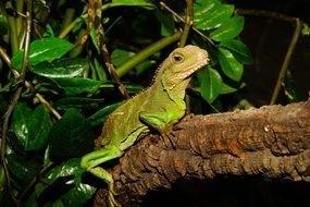 green lizard on a log in a terrarium
