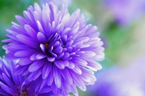 purple flower on blurry background