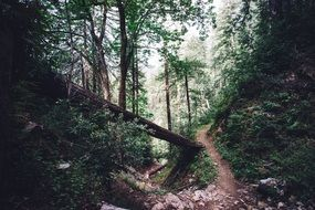 narrow forest trail