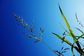 blades of grass and stems against a bright blue sky