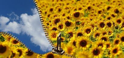 Summer Sky through open Zip in Sunflower field, collage