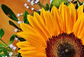 bright sunflower in a bouquet close-up