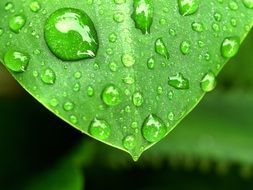 drops of dew on a green leaf close-up