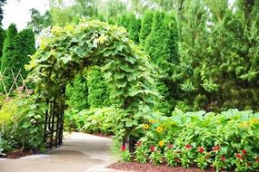 green blooming arch in the garden