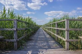 Wooden Boardwalk in spring
