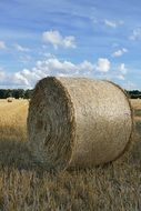 bale of straw on a field close up