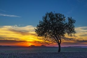 lonely tree on a background of color sunset