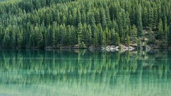 pine tree forest mirroring on the lake