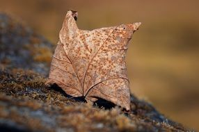 incredibly delicious Leaf Autumn