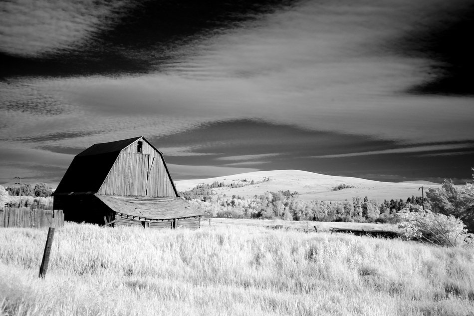 black and white photo of a barn in a field