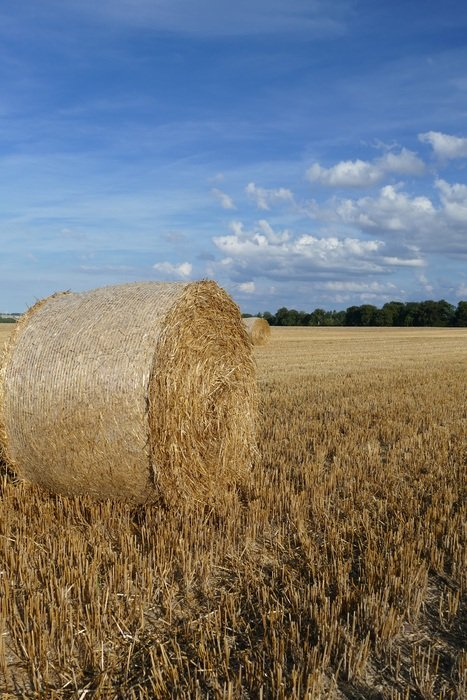 one bale of straw on the field