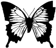 black white butterfly as a graphic illustration