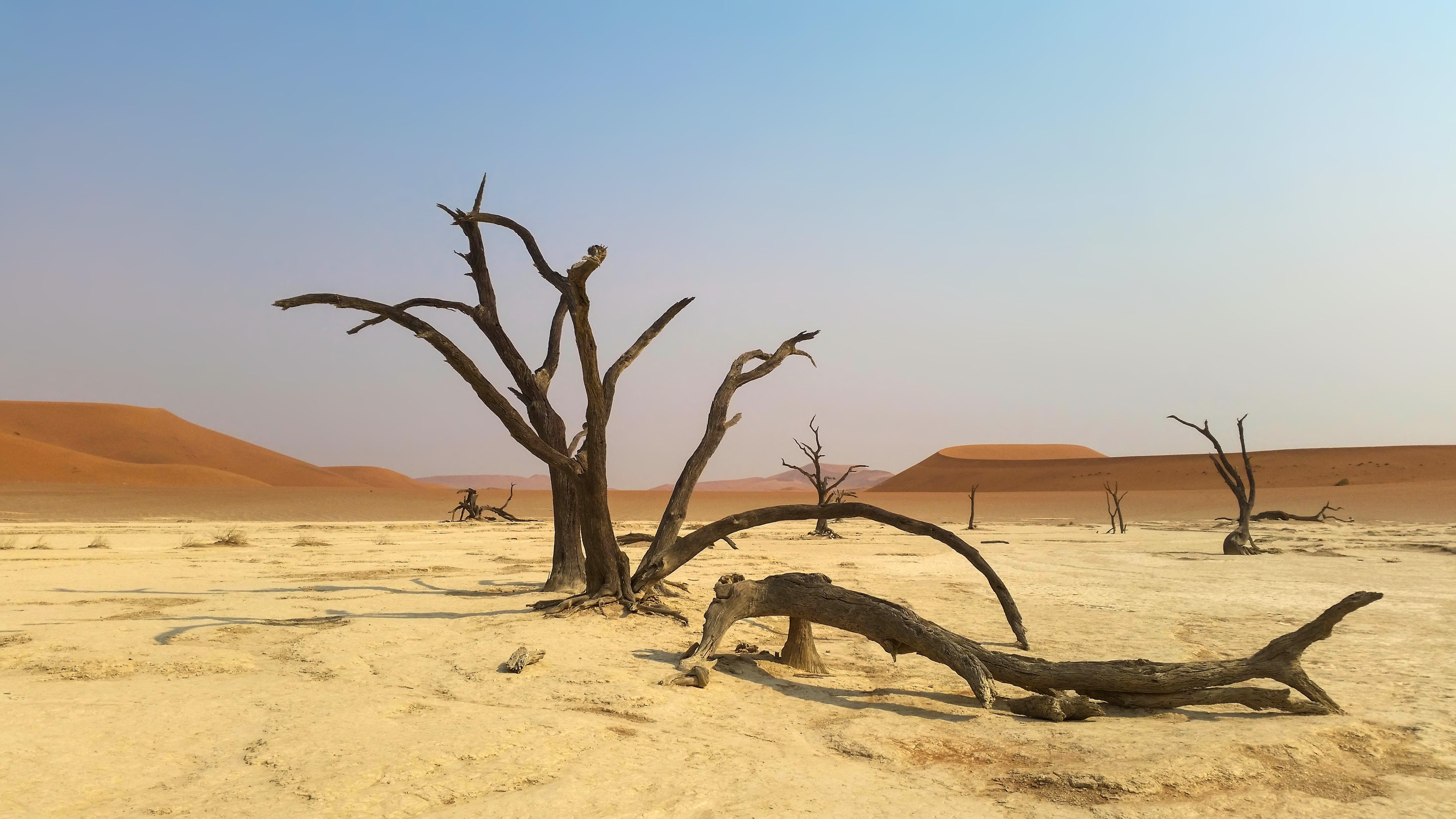 sahara desert plants - HD5217×2935