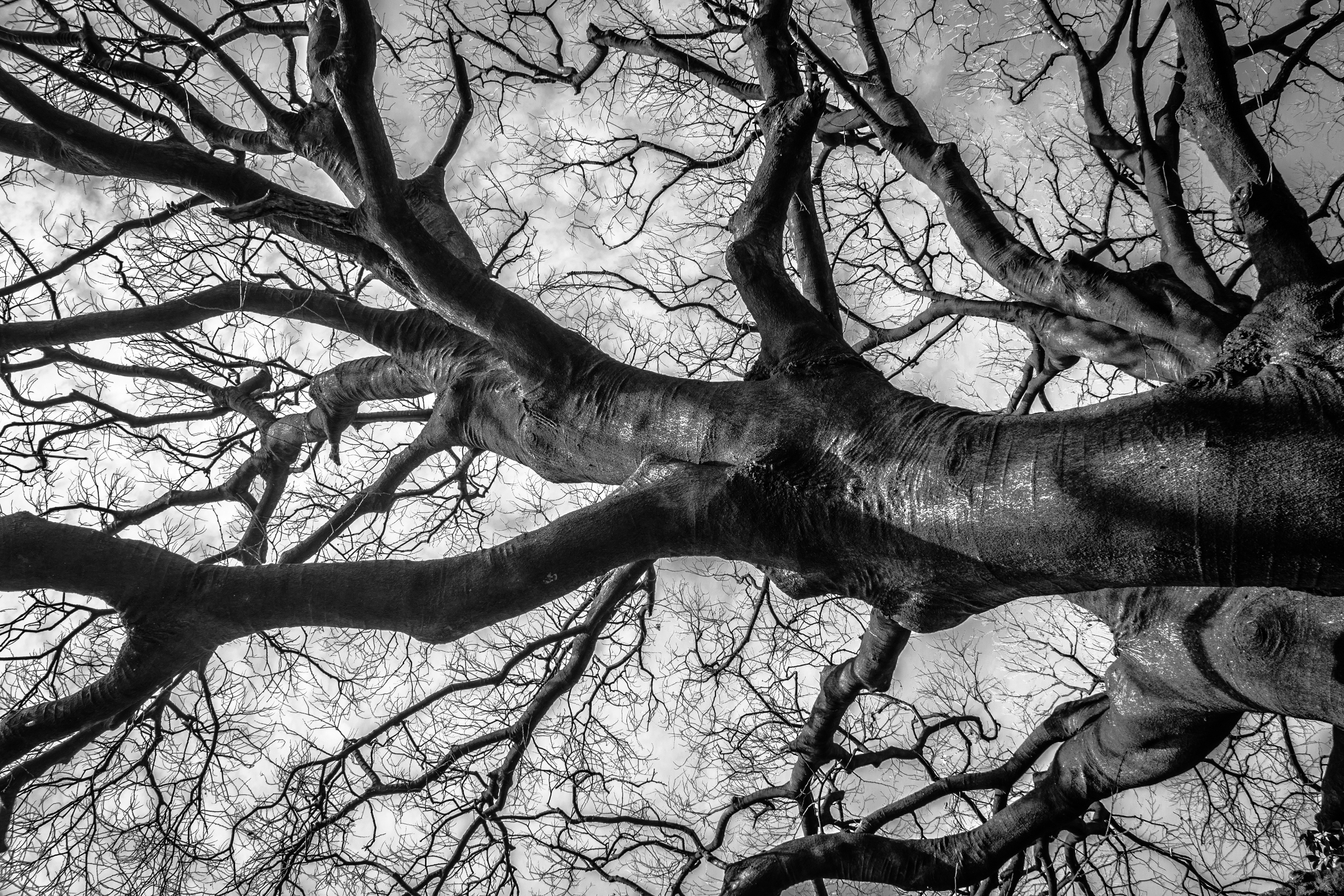 black-and-white-picture-of-tree