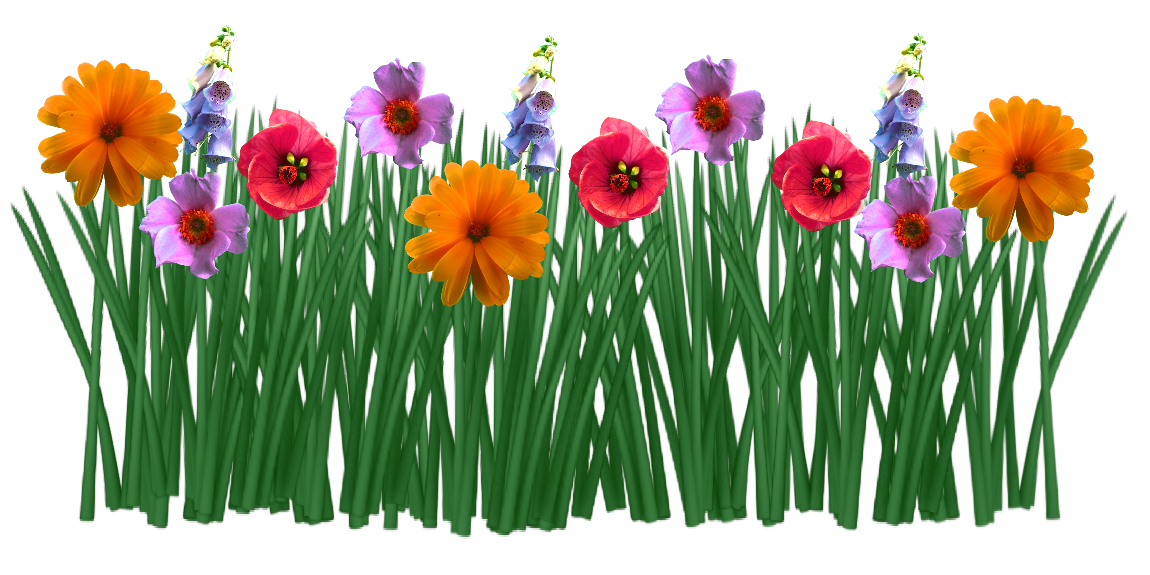 Colorful Spring Flowers Grass Drawing Free Image