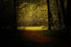 light in a forest glade