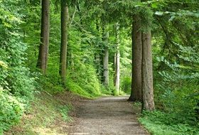 wonderful Forest Path