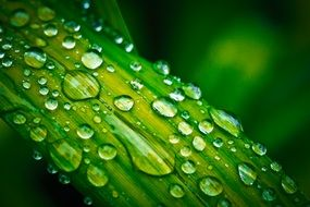 green oblong leaf in drops of water close-up