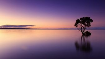lonely tree on a background of purple sunset