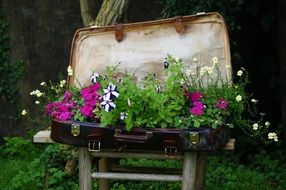 delightful beauty Luggage Plant