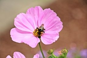 insect on a pale pink flower close-up