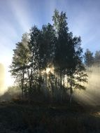 sun rays behind the trees in the fog