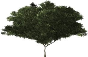 graphic image of a green tree with lush branches