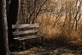 bench on the shore near a tree