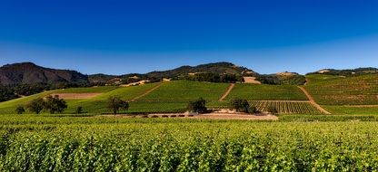 Vineyards Napa Valley California