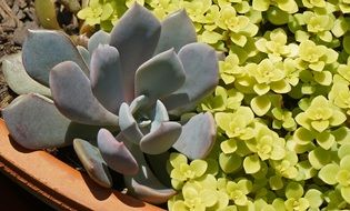 yellow and green succulent pot plants