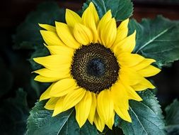 photo of artificial sunflower