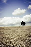 lonely tree on a plowed field