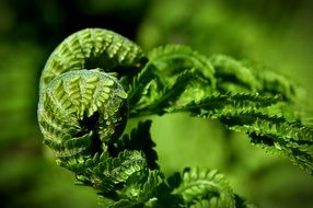 green fern plant photography
