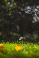 blurred view of the mushroom on the green grass