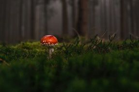 toxic mushroom in the forest