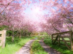 flowering trees on a farm