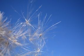 flying dandelion seeds against a blue sky