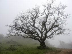 bare tree on a hill in the fog