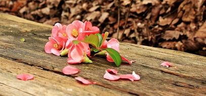 pink flowers lie on a wooden bench
